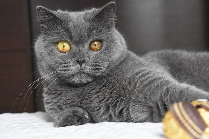 Cho mèo Aln tập thể dục thường xuyên