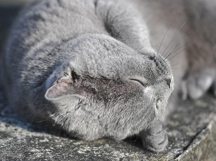 Thực Phẩm Chế Biến Tại Nhà Cho Mèo