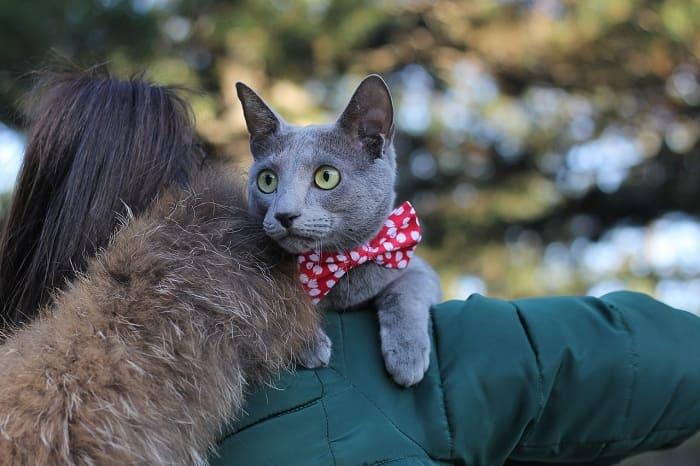 Chăm Sóc Mèo Nga Mắt Xanh