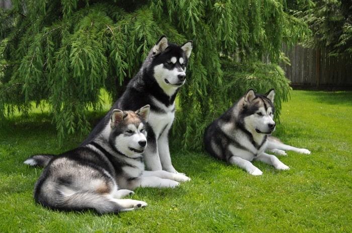 gia thanh cho alaska