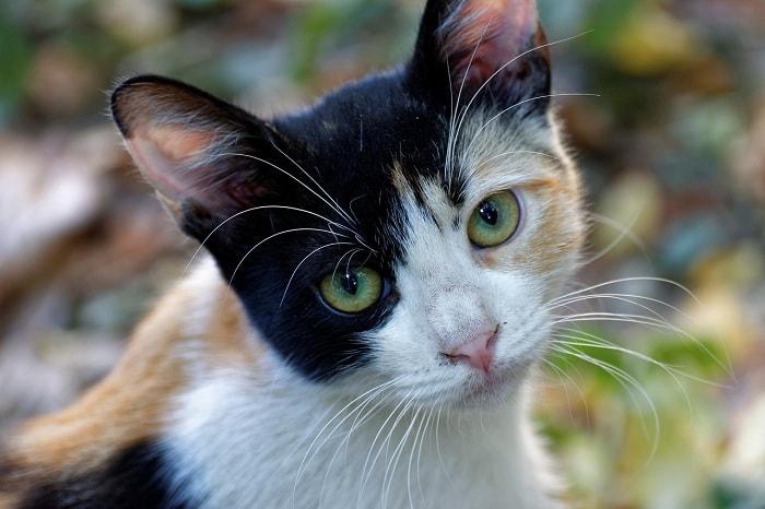 cach cho mèo tam thể đi vệ sinh