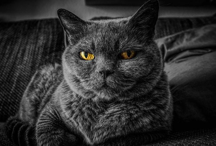 chú ý chọn cát vệ sinh cho mèo nhạy cảm