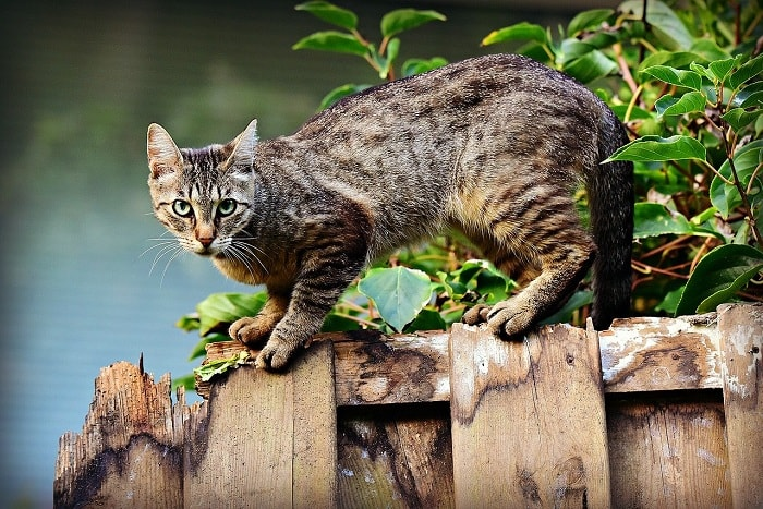 mèo bỏ ăn