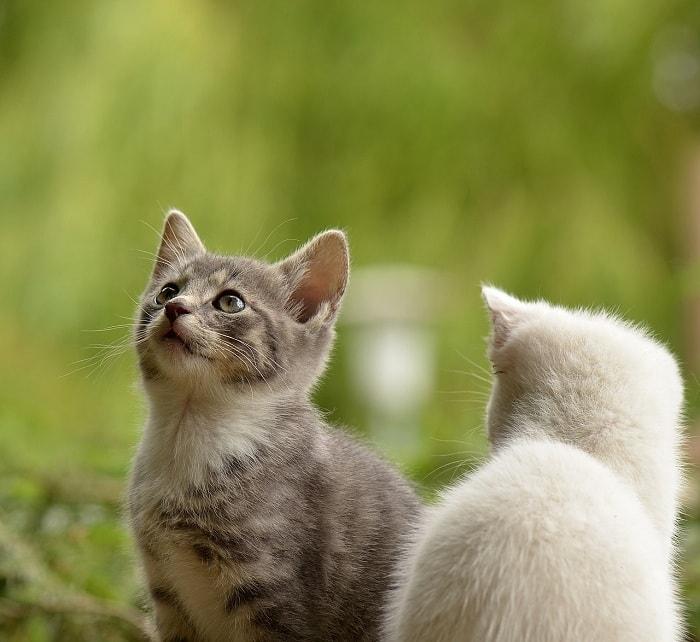 chon cat ve sinh nao cho meo