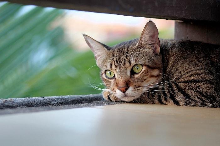 tác hại của rận mèo
