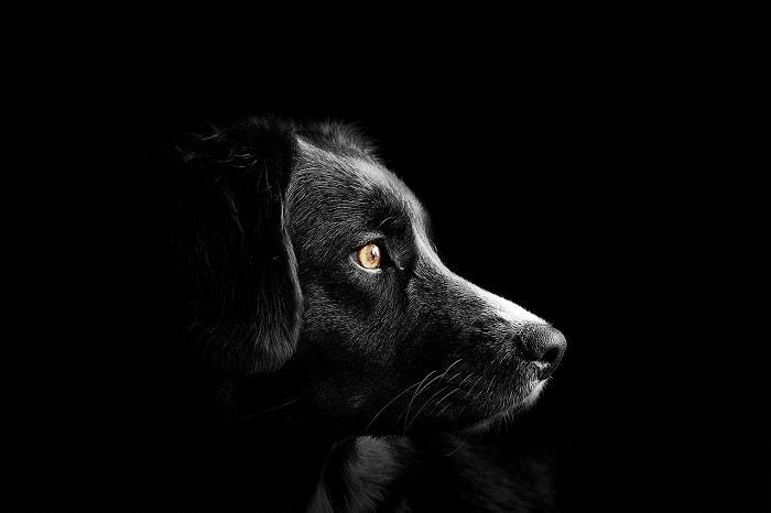 giá vacxin phòng ngừa 7 bệnh cho chó hiện nay