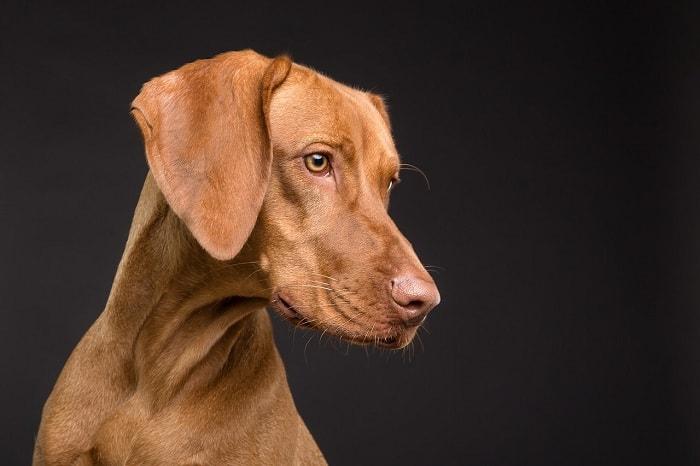 những luu y tiem vacxin cho chó