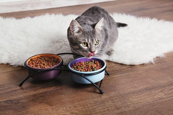 cách chọn thức ăn cho mèo