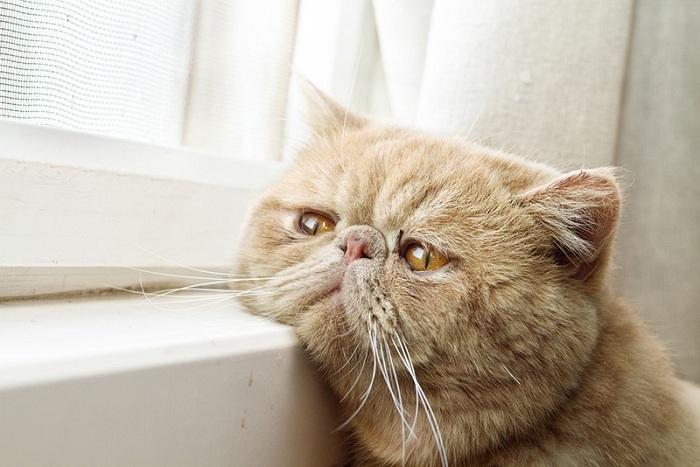 mèo bị táo bón