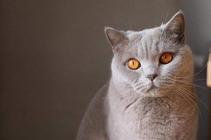 mèo sống được bao lâu