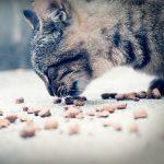 thức ăn khô cho mèo loại nào tốt