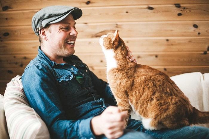 6 Cách Nhanh Nhất Để Huấn Luyện Mèo - Gia Đình Pet