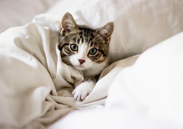 Dấu Hiệu Nhận Biết Mèo Cảm Lạnh