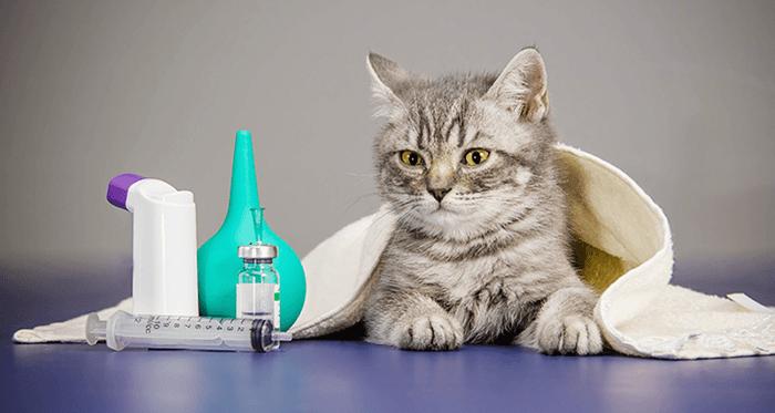 cách chữa trị mèo bị hen suyễn