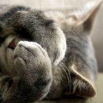 mèo bị stress