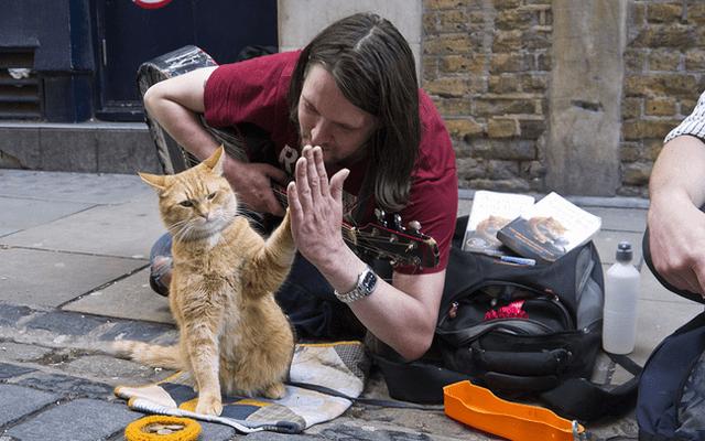 mèo hoang kiếm tiền