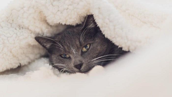 Nguyên Nhân Mèo Bị Cảm Lạnh
