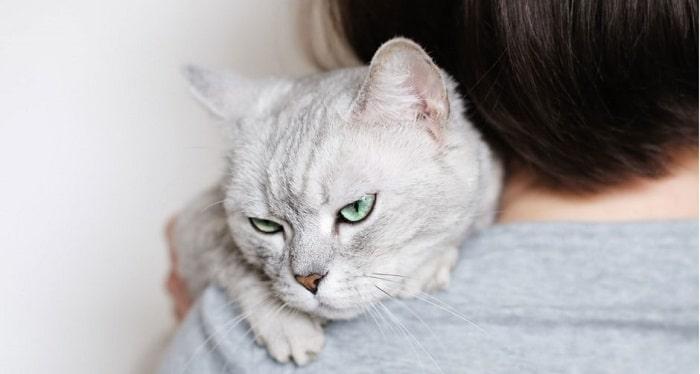 nguyên nhân mèo bị stress