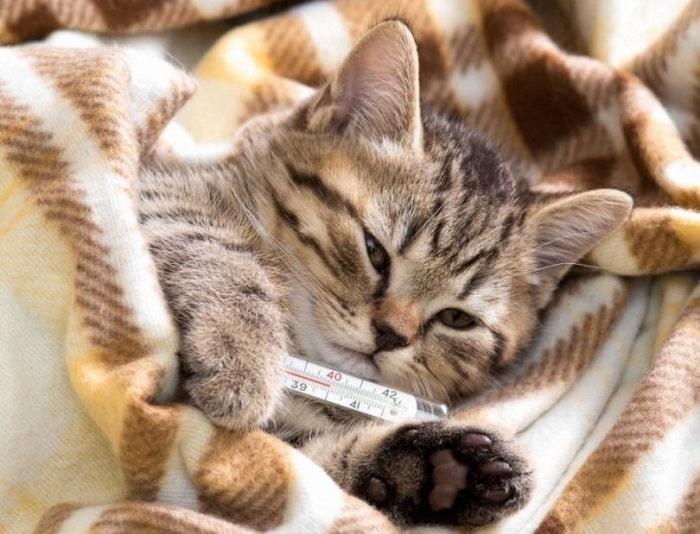Phòng Ngừa Mèo Bị Cảm Lạnh
