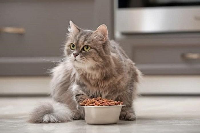 thức ăn ướt cho mèo