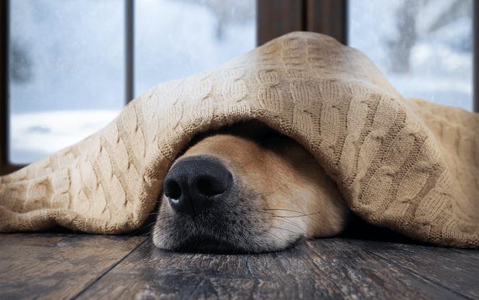 Cách Điều Trị Chó Bị bệnh Care