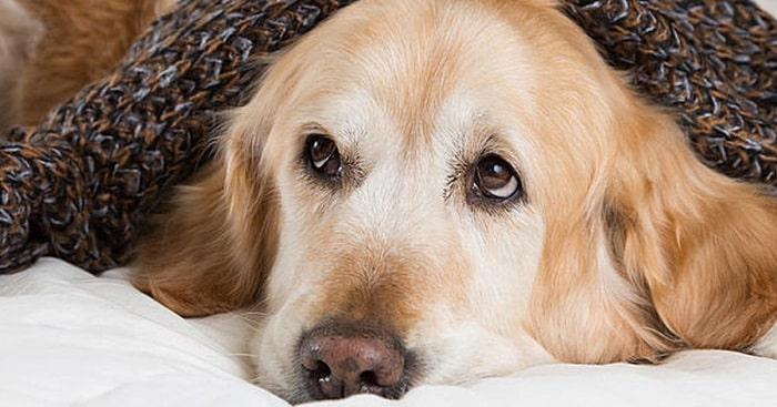 Nguyên Nhân Chó Bị Bệnh Care