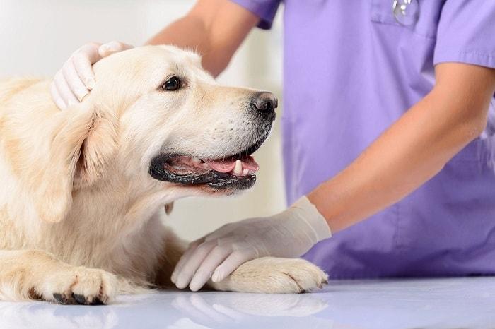 nguyên nhân chó bị bệnh đường ruột