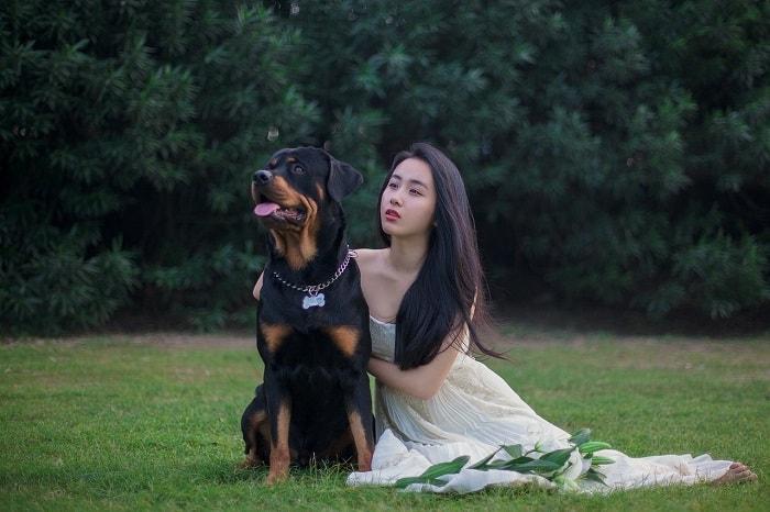 Đặc Điểm Ngoại Hình Chó Rottweiler
