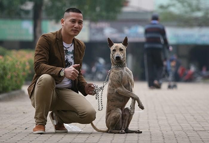 Các Bệnh Thường Gặp Ở Chó Phú Quốc