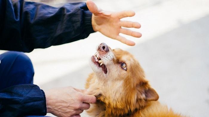 Điều Trị Chó Bị Bệnh Dại