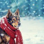 chó bị cảm lạnh