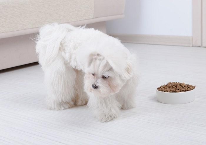 Cho Chó Ăn Trong Thời Gian Bị Bệnh