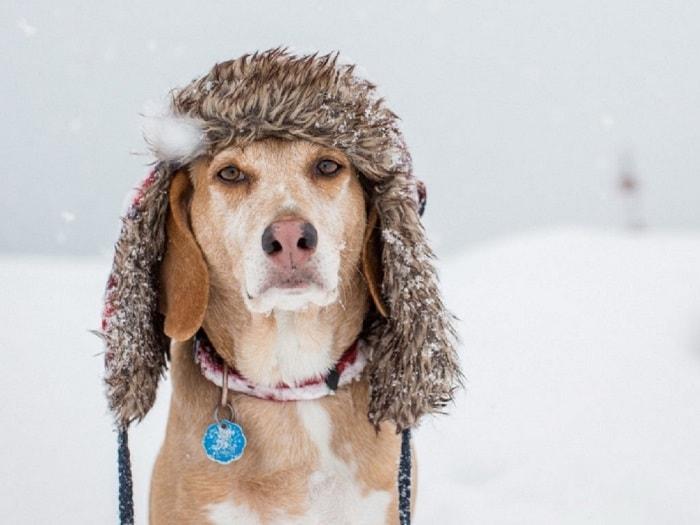 Dấu Hiệu Chó Bị Cảm Lạnh