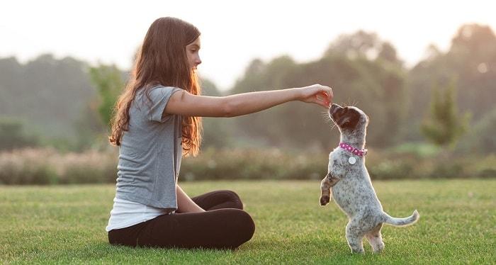 Cách Huấn Luyện Chó Con Bắt Tay Với Con Người