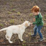 cách huấn luyện chó con