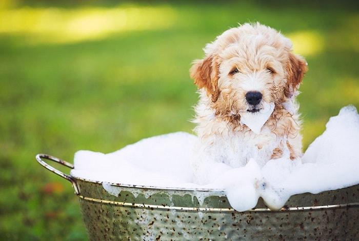 Cách Tắm Cho Chó Con