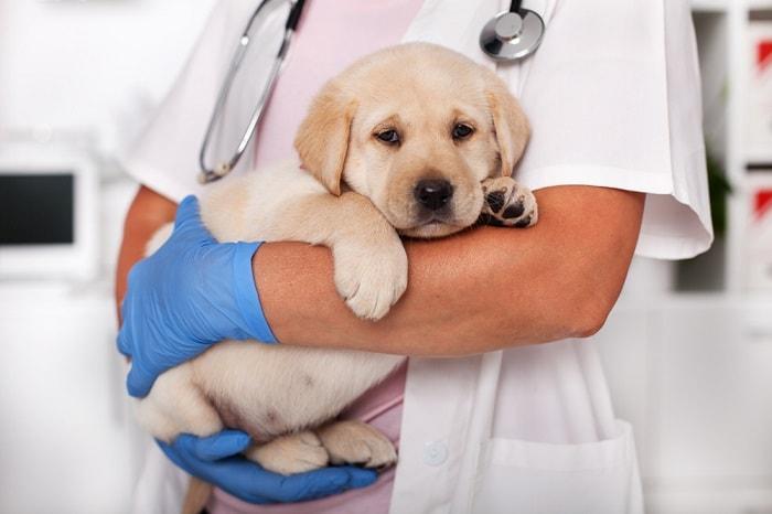 uống thuốc gì khi chó con bị tiêu chảy