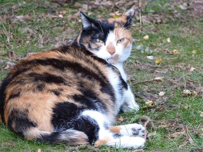 Đồ Dùng Cần Chuẩn Bị Khi Nhận Thấy Dấu Hiệu Mèo Sắp Đẻ