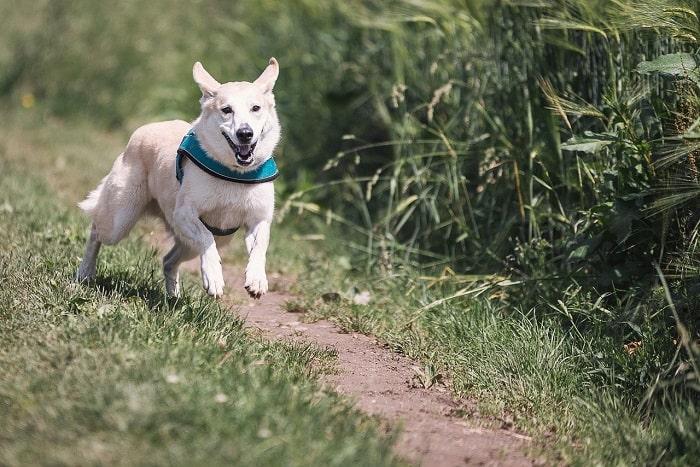 Dấu Hiệu Nhận Biết Của Chó Đực Khi Đến Mùa Giao Phối