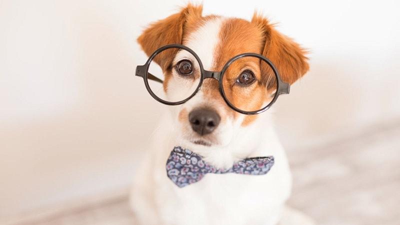 dấu hiệu nhận biết chó khôn