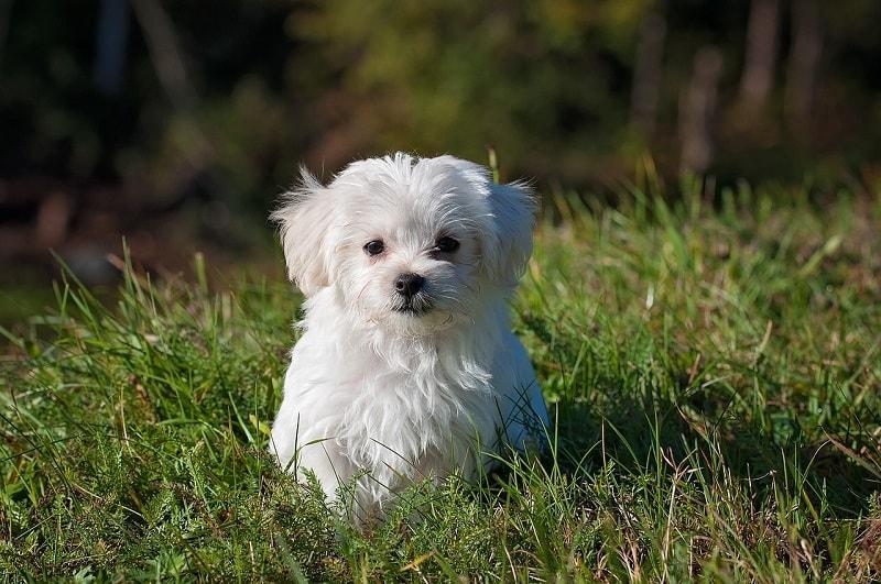 hình ảnh chó con dễ thương