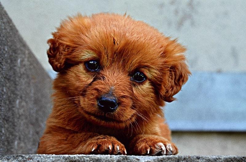 Hình Ảnh Chó Con Đẹp