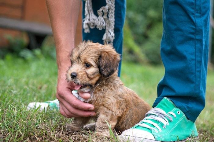 Cách Huấn Luyện Chó Con Đi Vệ Sinh