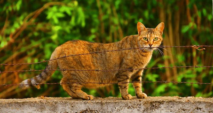 Lưu Ý Quan Trọng Về Quá Trình Chuyển Dạ Của Loài Mèo