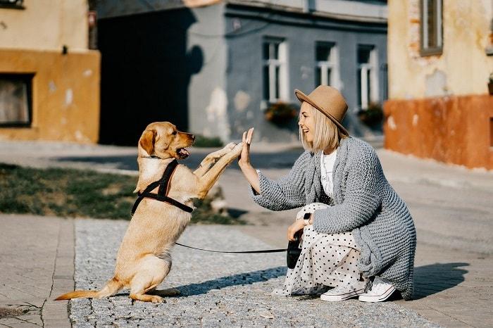 Top Những Giống Chó Dễ Nuôi Nhất Việt Nam