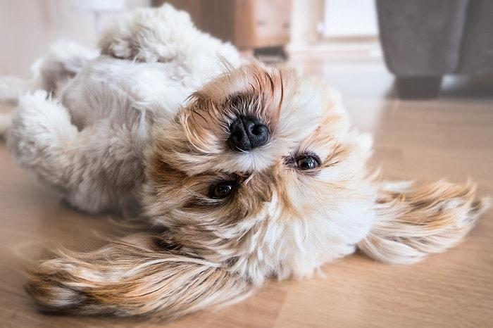 Những Chú Chó Dễ Thương Nhất Thế Giới
