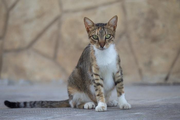 Một Số Những Dấu Hiệu Mèo Sắp Đẻ Cơ Bản Nhất