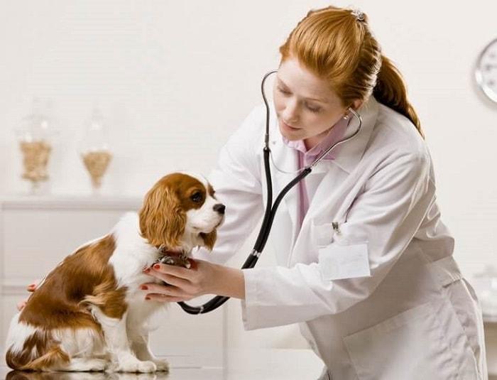 Thuốc Tẩy Giun Cho Chó Được Bác Sĩ Thú Y Khuyên Dùng