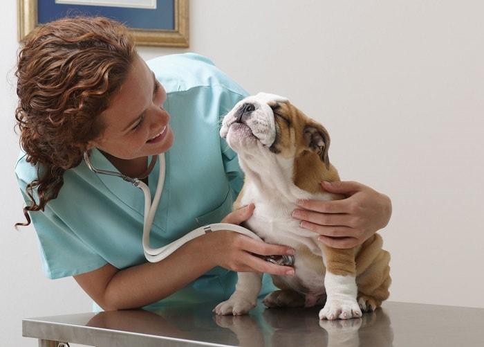 Thuốc Tẩy Giun Cho Chó Con An Toàn