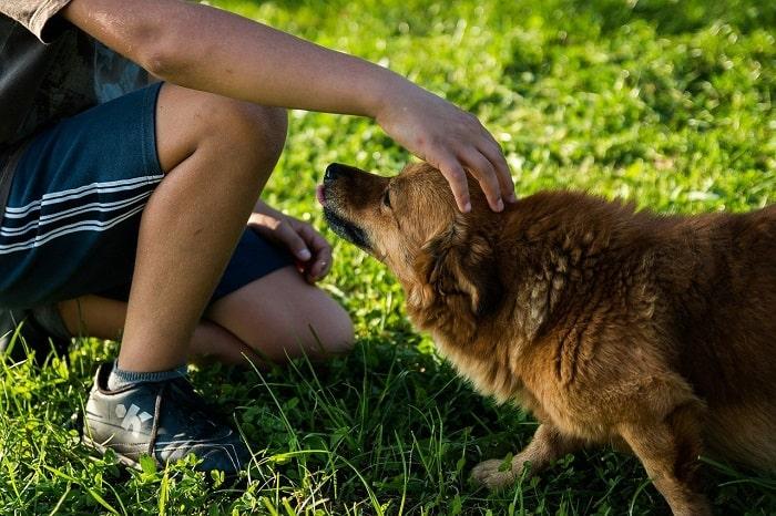 Những Lý Do Nên Nhận Nuôi Chăm Sóc Một Một Chú Chó